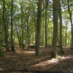 Boigneville - la forêt
